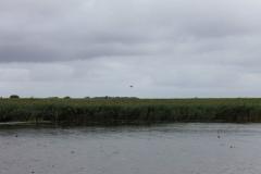 Fiskekonkurrence efterår 2012